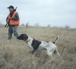 Quail hunting in sc for Sc non resident fishing license