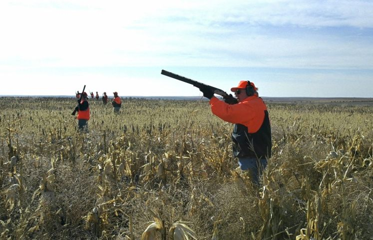 Quail hunting in sc for Sc fishing license cost